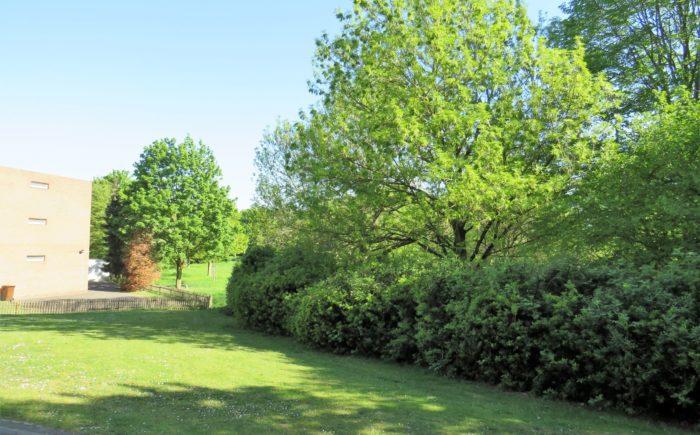 Grünanlage Mehrfamilienhaus