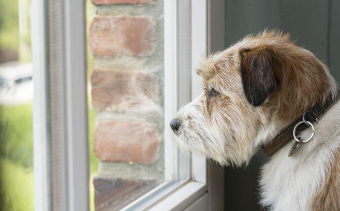 Charly schaut aus dem Fenster